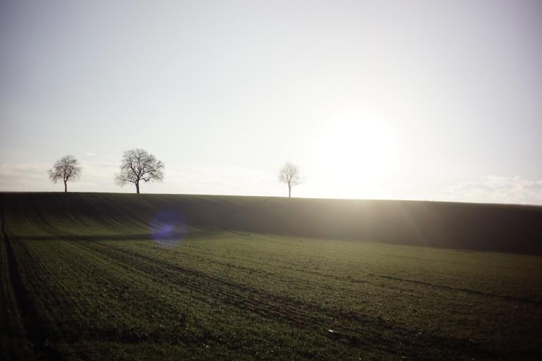 Nana Avingarde - Naturwesen-Erlebnisseminare in der Pfalz. Mediation und Spiritualität.